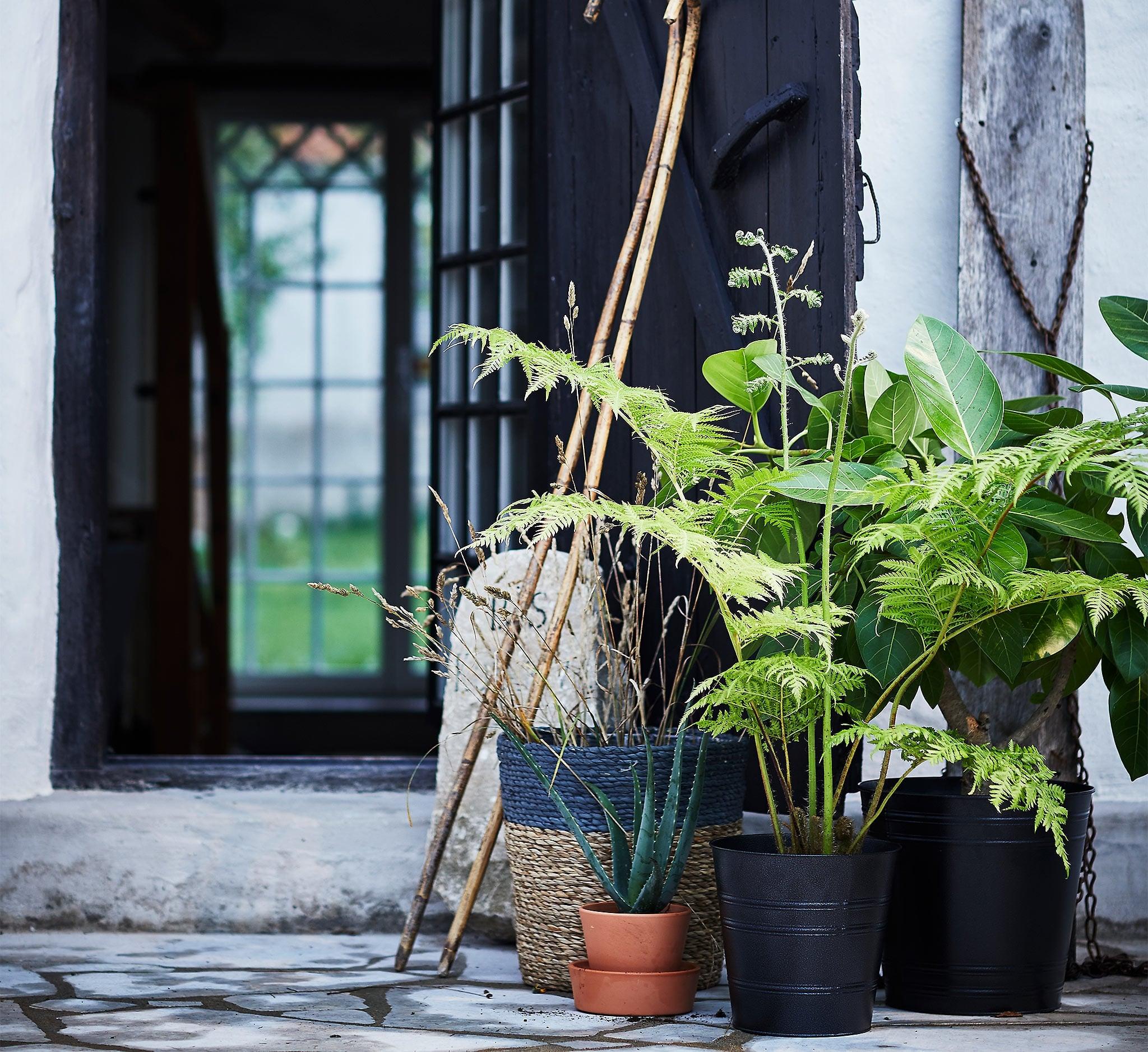 Quelle Plante Mettre Dans Un Grand Pot Exterieur ▷ classement & guide d'achat : top pots de fleurs